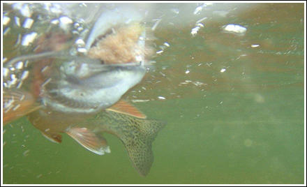 Fly Fishing Guides Flies Fishermen Gear Trout