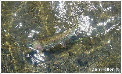 Fly Fishing Guides Flies Fishermen Gear Trout Below Surface 1-2014
